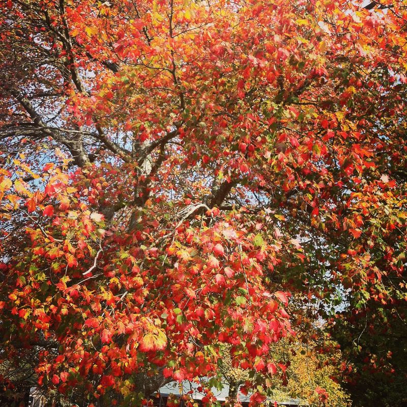Photo Oct 17, 12 43 09