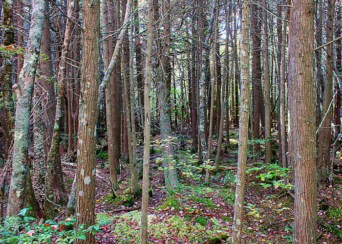 Cedar-swamp-hike1
