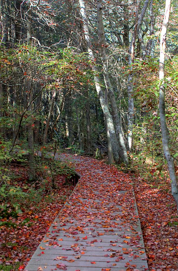Cedar-swamp-hike2