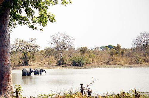 Elephant pond2