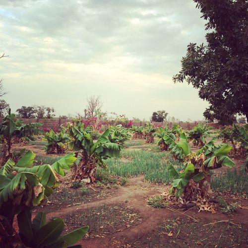 burkina faso lombilla garden