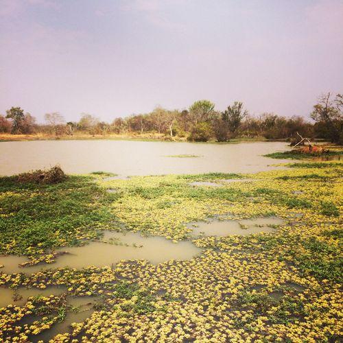 burkina faso nazinga pond