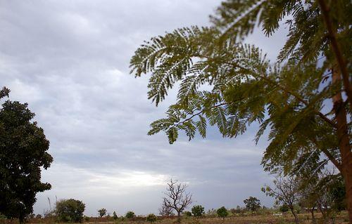 Loumbila garden3